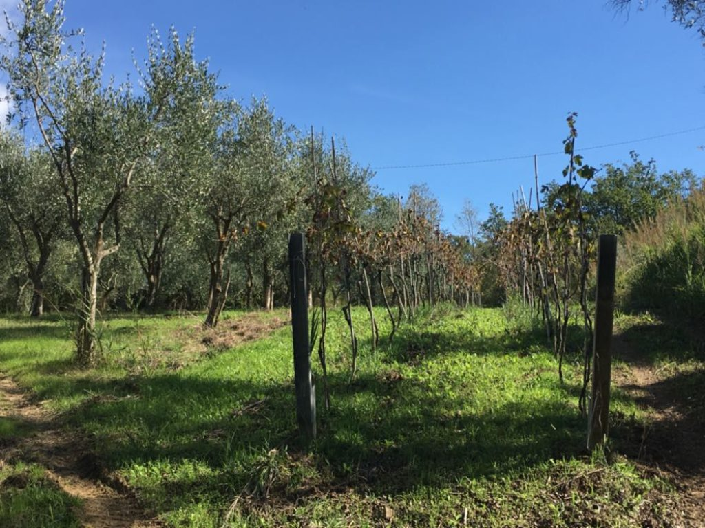 Lotto di Terreno Agricolo a Pollica